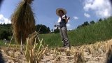 yuka-rice-fields-1